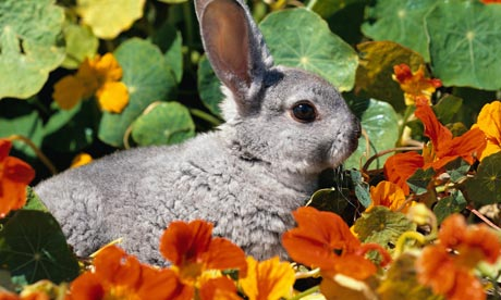 a-rabbit-in-a-garden-in-s-001